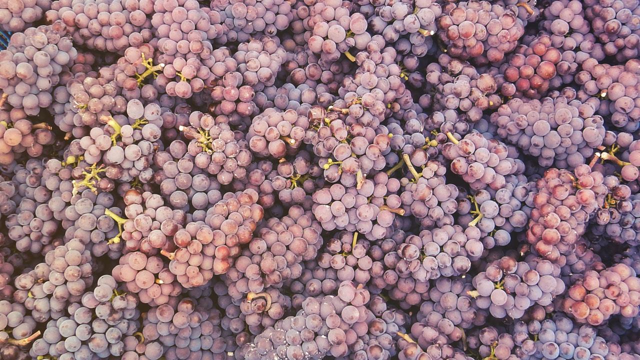 Grona Pinot Gris